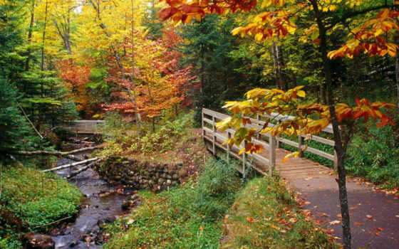 природа, осень, природы Фон № 64931 разрешение 1920x1200