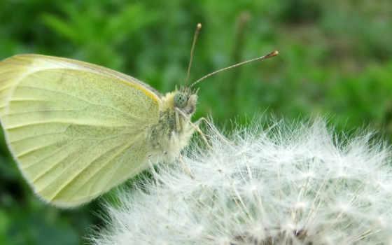 мотылек, motyl, бабочка