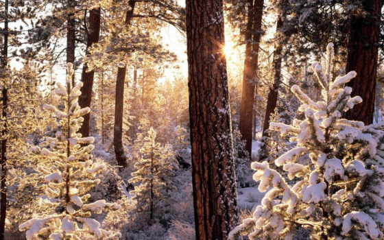лес, winter, лесу