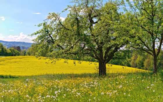 весна, широкоформатные, одуванчики