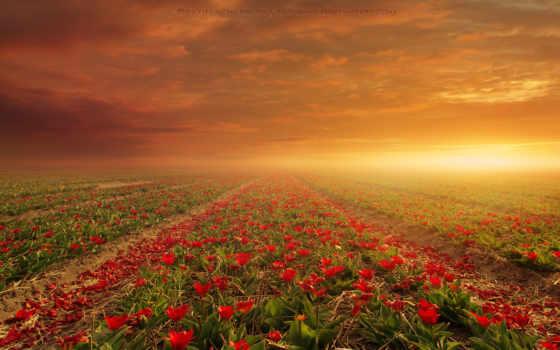 поле, цветы, flowers