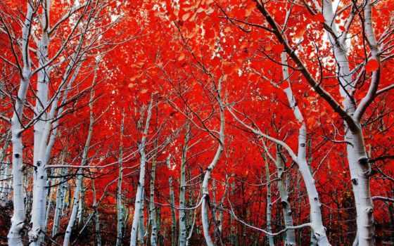 осени, осень, краски, яркие, года, фотографиях,