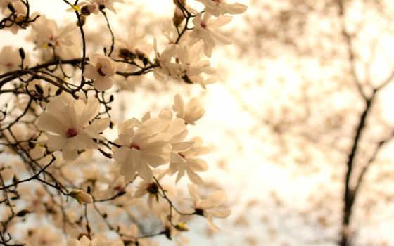 cvety, весенние, фотопанно, ванильные, manufacture, sale, доставка, модульные, фотообоев, беларуси, фотообои,