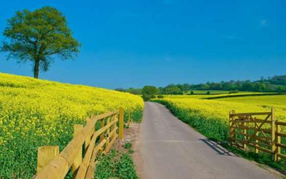 summer, дорога, cvety, забор, поле, небо, салатовый, ясное,