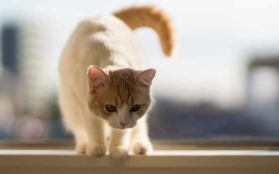 кот, за, tail, сладкое, feline, iphone, свой, однако, лет,