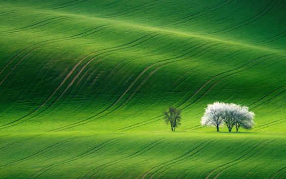 ,, пастбище, зеленый, экосистема, поле, трава, луг, прерия, grass family, атмосфера, небо,