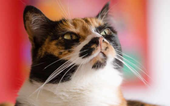 кот, картинка, смотреть, eyes, фон, усы, котенок,