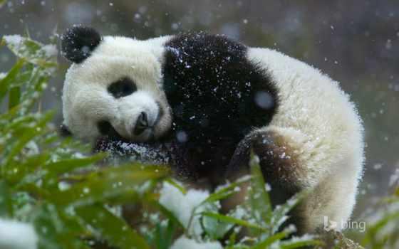 панда, балахон, cute, спать, фокс, товар