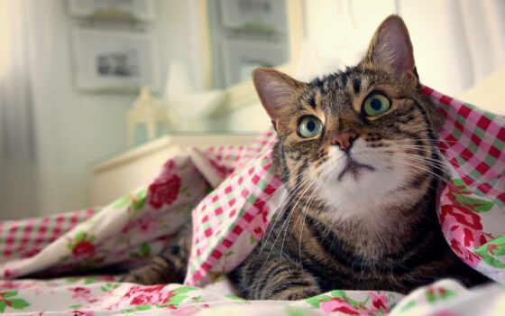 кот, id, котенок, шляпа, pet, cute, gato, смотреть, морда