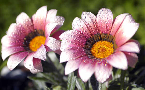 цветы, яркий, drop