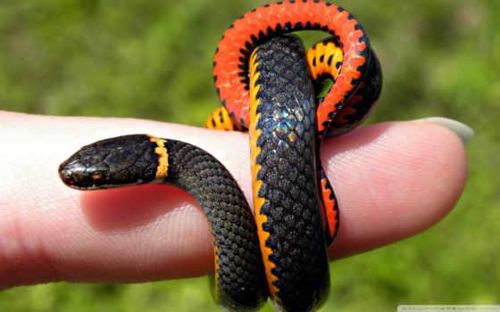 змея, уж, палец, чешуйки, картинка,