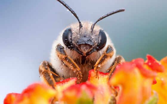 насекомые, koteg, июня, макро, фотографии,