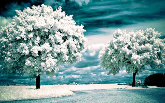 trees, landscape, infrared