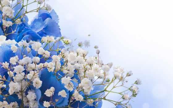 цветы, белые, синие