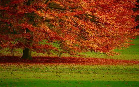 осень, листва, дерево