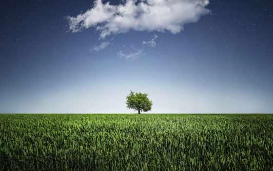 дерево, зелёный, одиночка