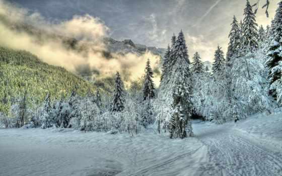 природа, снег, красивые, winter, лес, daily, trees, туман, горы,