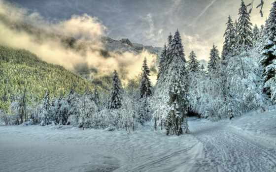 winter, природа, туман, снег, лес, trees, красивые, горы, только, daily,