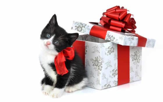 новогодние, кошками, котята