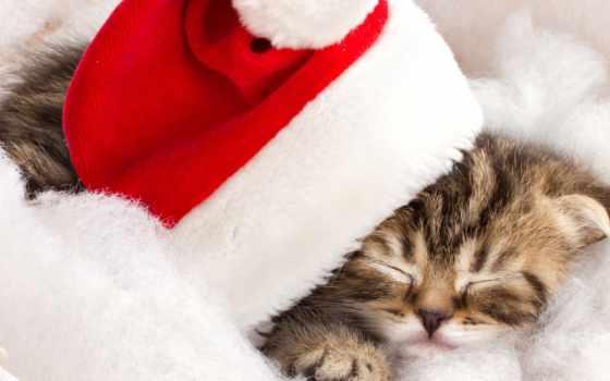 gatito, navidad, gato, красная, шапка, новогодняя, cesta, кот, stock,