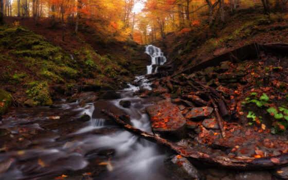 осень, free, природа, time