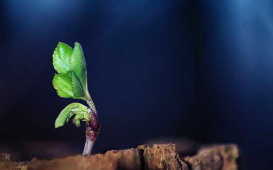 листья, макро Фон № 23903 разрешение 2560x1600