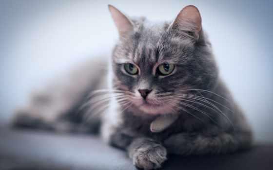 кот, отдых, июня