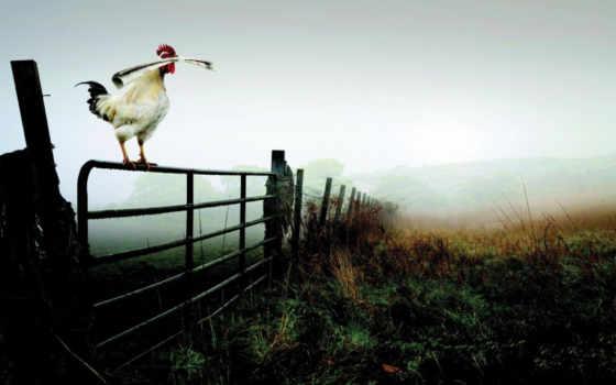 cock, pictures, online