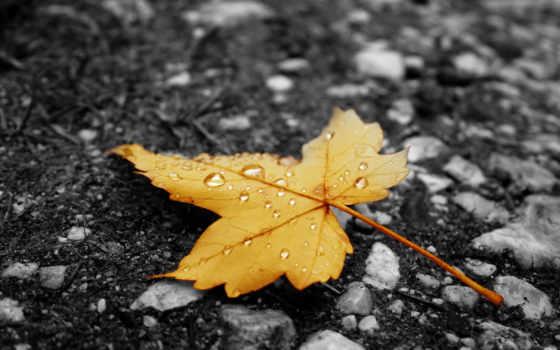 дождь, осень, лист, асфальт, капельки,