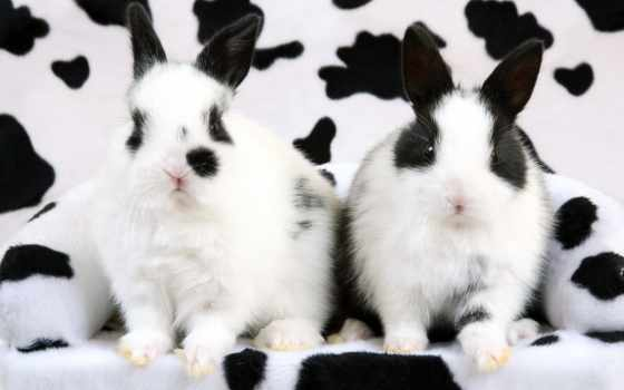 кролики, possible, далматинцы, наши,