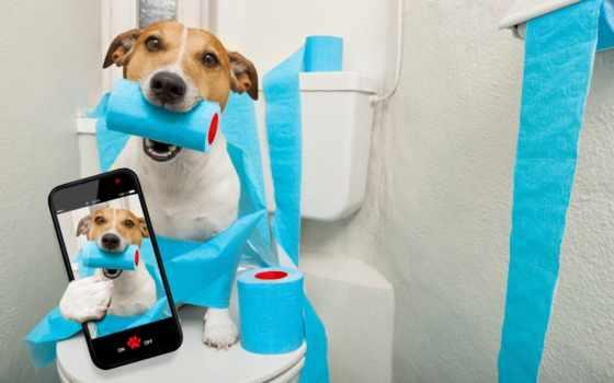 прикольные, юмор, уже, собаки, лучшая, загружено, коллекция, интерьер, широкоформатные,