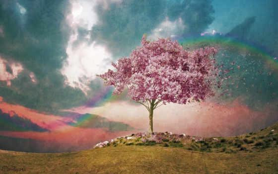 дерево, розовое, фактура, небо, цветение, радуга, ветер, цветущее,