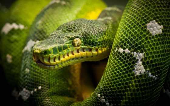 , змеи, ящер, рептилии, reptile, snake,