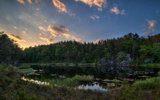 лес, norwegian, озеро, trees, природа, трава, леса, норвегии, норвегия,