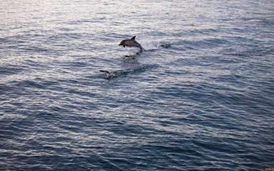 дельфины, прыжок,