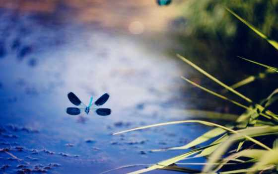 depth, field, nature, стрекоза, растение, полет, high,