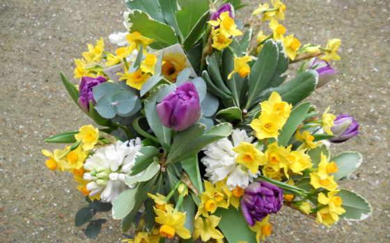 цветы, нарциссы, букеты