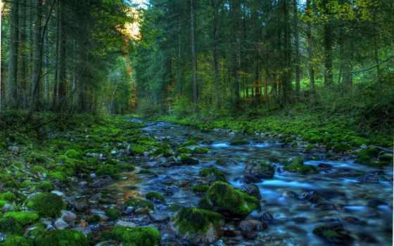 ручей, лесу, графика