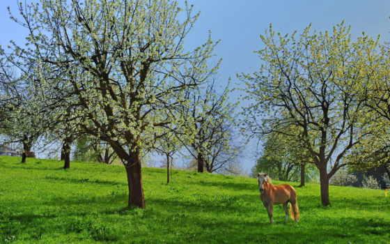 kwitnące, картинку, drzewa
