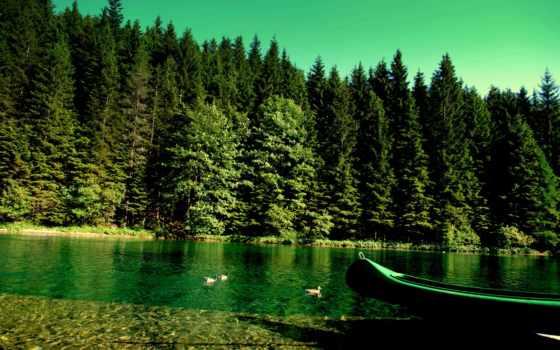 лес, природа, река