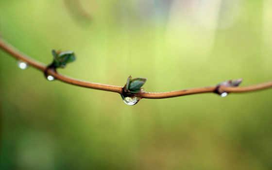 роса, drops, весна