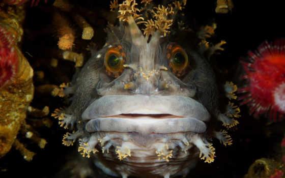 underwater, photography, фотоконкурса