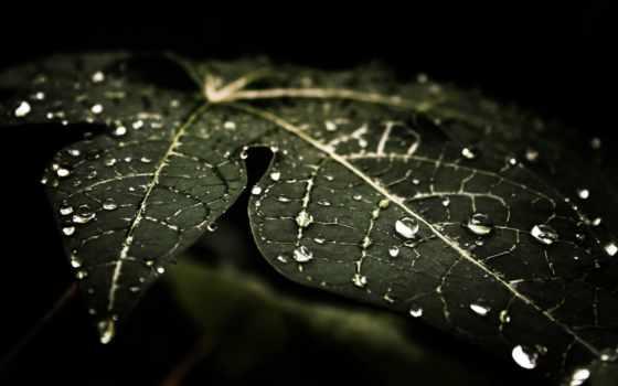 fondos, dark, pantalla, abstract, leaf, free, blue,