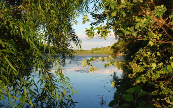 природа, фотообои, фотопанно, water, листья,