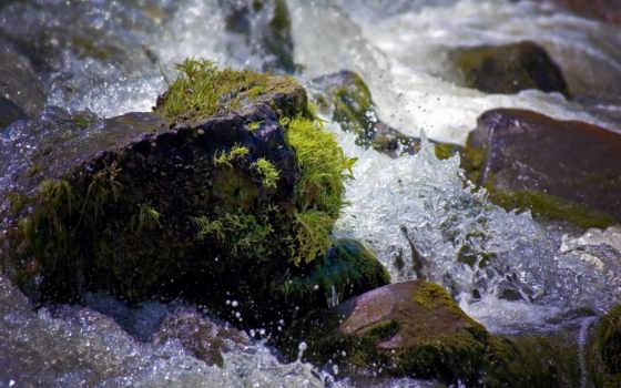 камень, water, камни, воде, брызги, тигр, река,