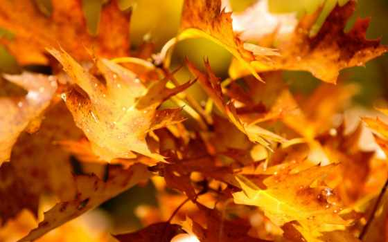 осень, природа, осенние, осенняя, живые, осени, музыка, палитра, богата, оранжевый,