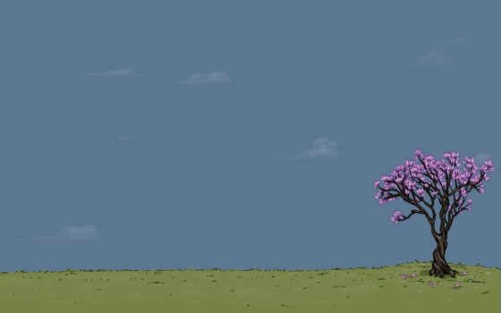 небо, дерево Фон № 18497 разрешение 1680x1050