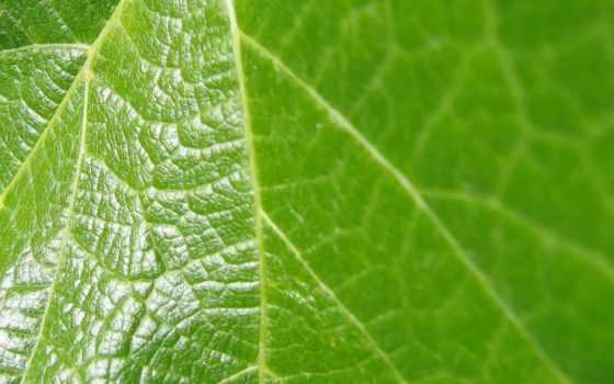 листва, лист, зелёный, зеленые, банка, листе,