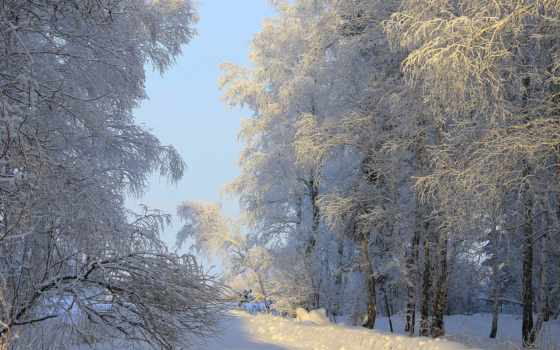 winter, природа, красавица, зимние, alcatel, кб, пейзажи -, снег, дневник, tatyana, brook,