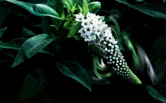 зелёный, природа, arielle, emerald, макро, камни, насекомые, код,